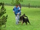 Junghunde 22.05.2004