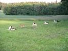 Oberhasli 25.05.2004