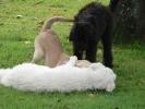Junghunde 03.09.2005
