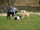 Junghunde 12.02.2005
