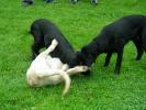 Junghunde 16.09.2006