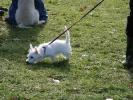 Junghunde 21.01.2006