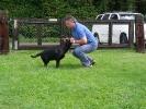 Junghunde 16.06.2007