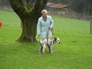 Junghunde 05.04.2008