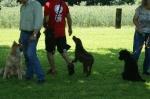 Junghunde 21.06.2008