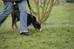 Junghunde 05.12.2009