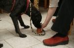 Hundespiele vom 20.05.2010