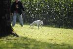 Junghunde 11.09.2010