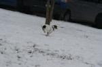 Junghunde 16.01.2010