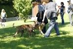 Junghunde 31.07.2010